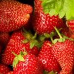 strawberry-masthead