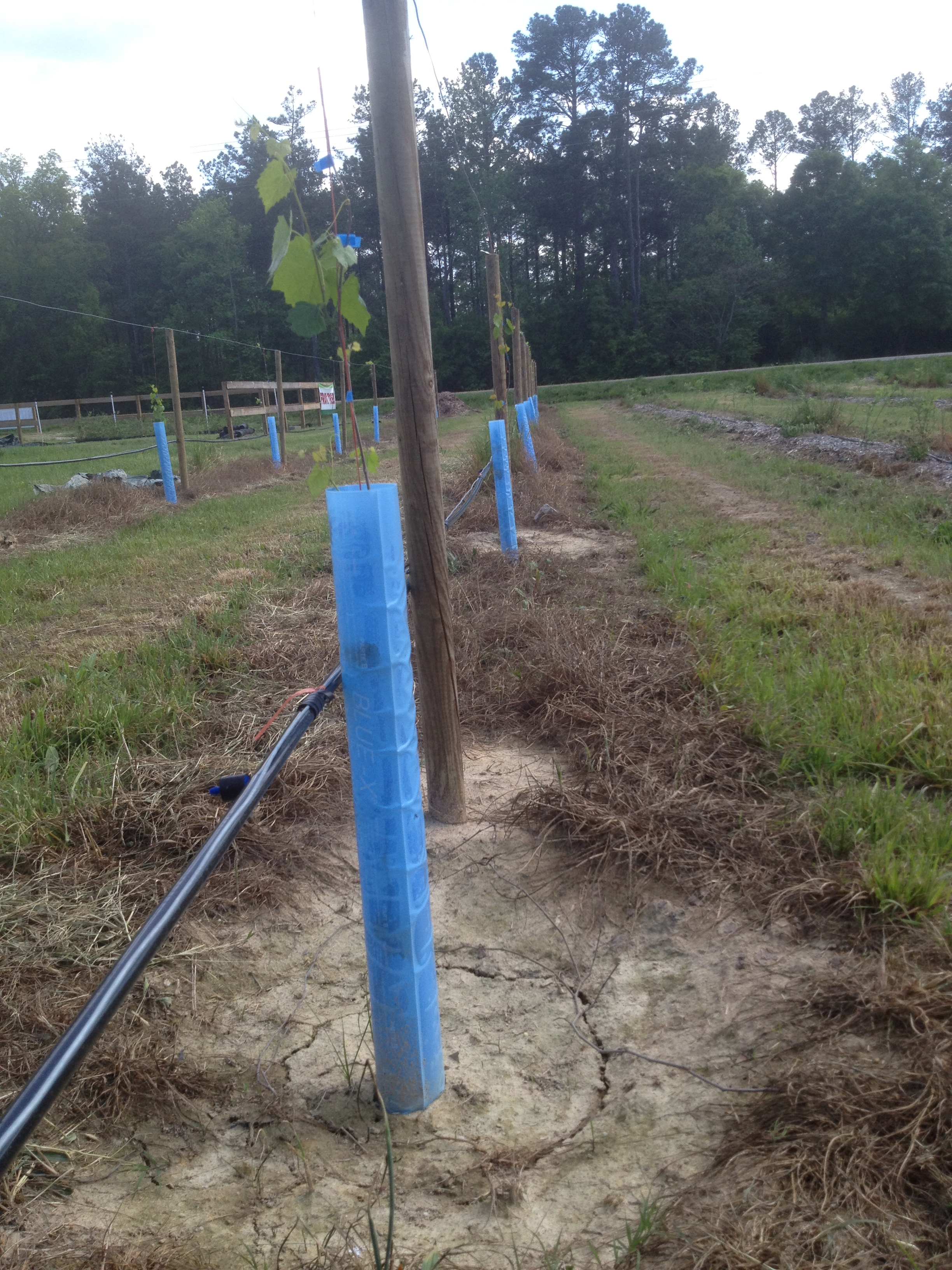 Blue-X Plant Shlelter