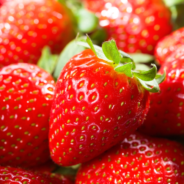 Cardinal Strawberry. Mid-season. Great for the south. Huge fruit and very sweet. Disease resistant. Zones 5-8.