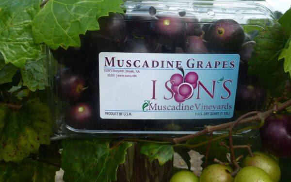 Packaged supreme muscadine fruit