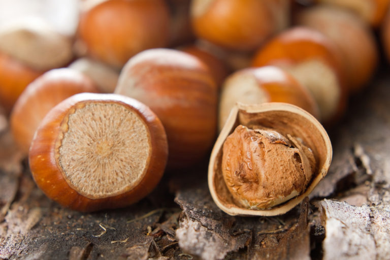 Clark Hazelnut Tree. High quality and flavorful. Zones 5-8.