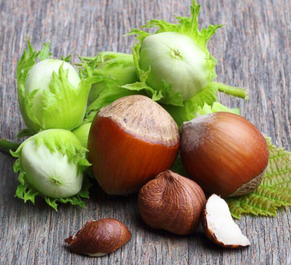 Jefferson Hazelnut Tree. Best all around variety. High yields of tasty nuts. Plant with another hazelnut. Zones 5-8