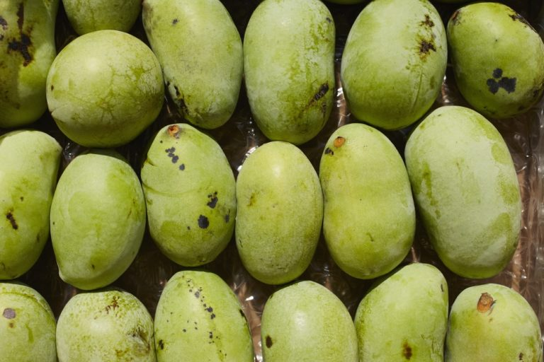 Paw Paw Trees. Large tropical custard like fruit. Plant 2 for pollination. Grows 20'. Zones 5-8.
