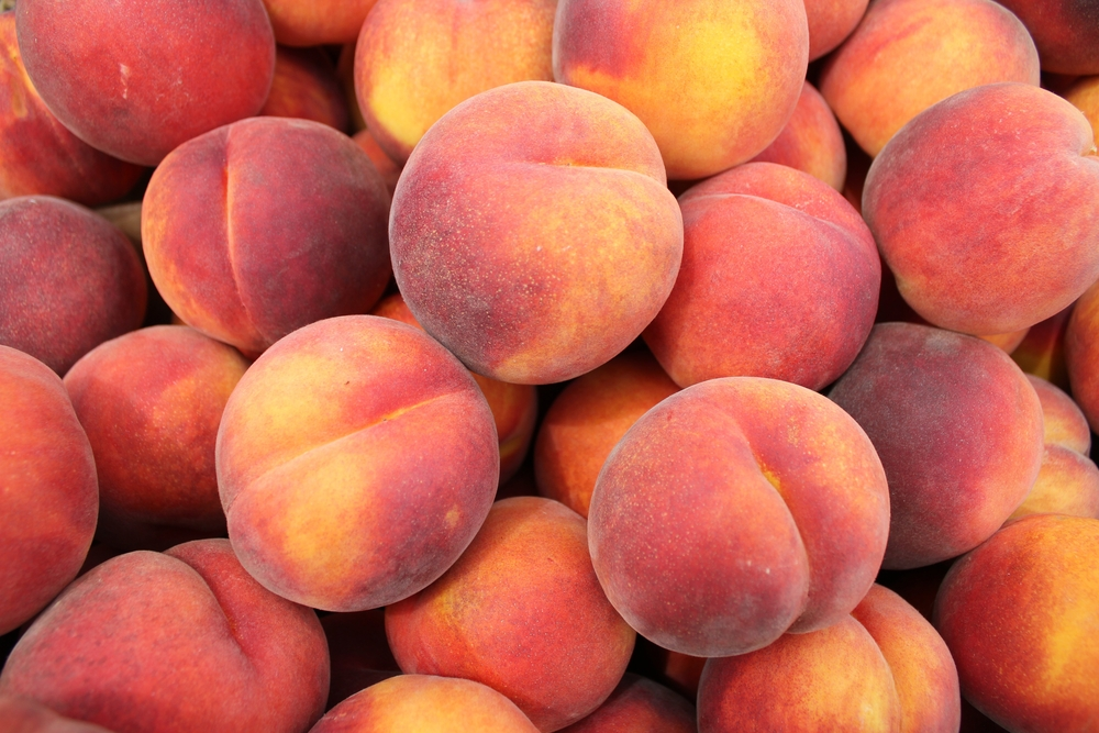 Dixieland Peach Tree. Freestone. Very large. A favorite. Sweet and very juicy. Grows great throughout the southeast. 750 chill hours. Zones 5-8.