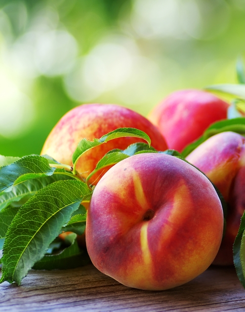 Sunglo Nectarine Tree. Large, smooth skin, high quality fruit. Flesh is sweet firm and juicy. Ripens early Aug. 800 chill hours. Zones 5-8.