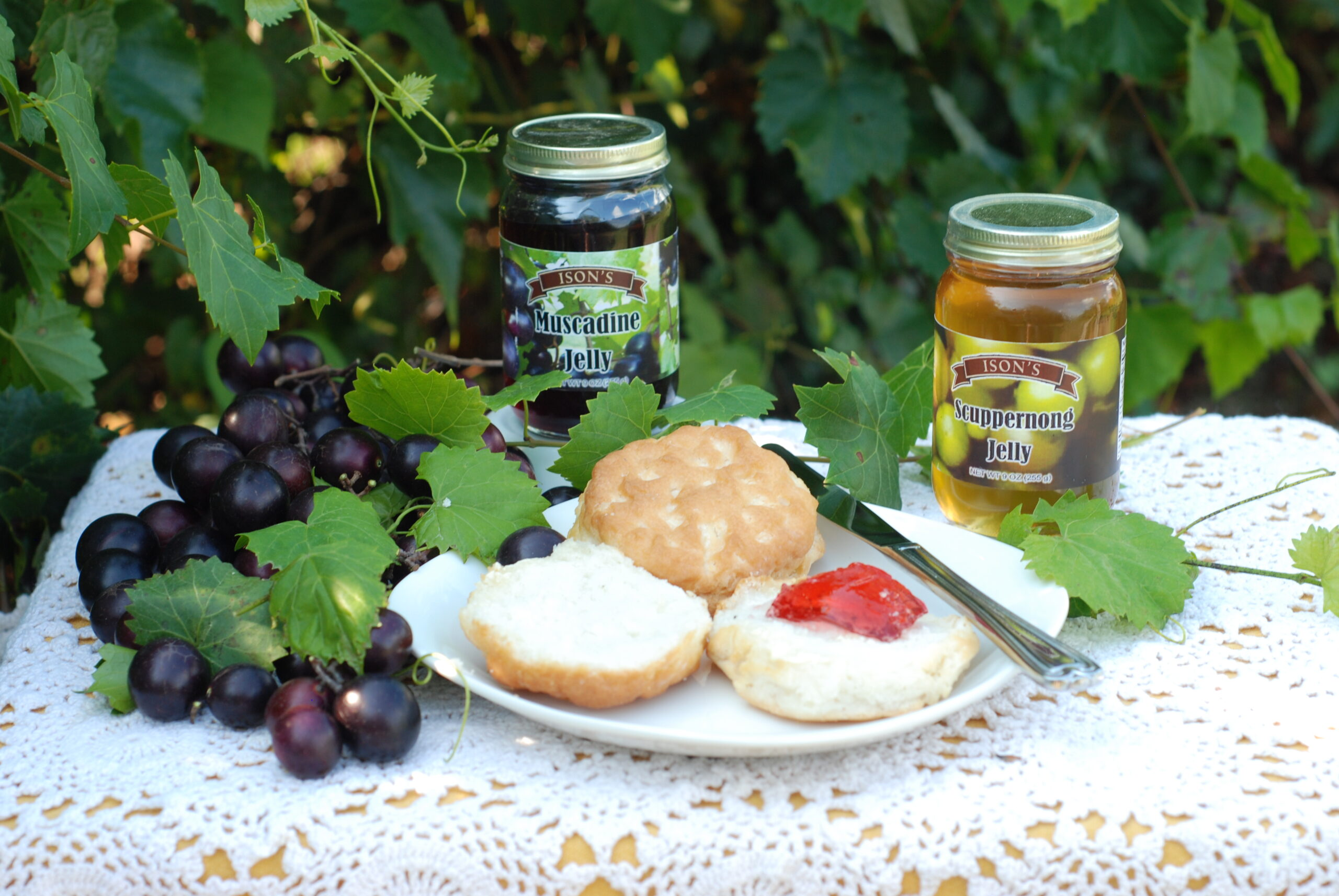 Delicious Muscadine and Scuppernong Jelly