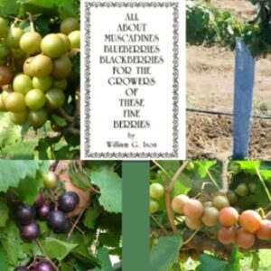 Muscadine Packages