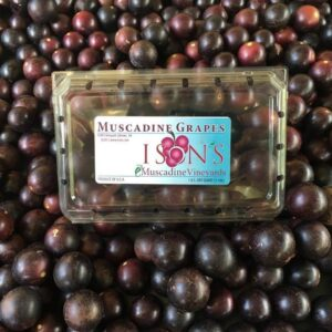 Fresh Fruit Muscadines