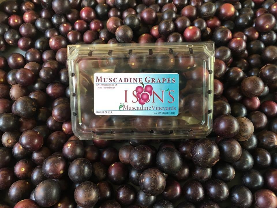 Muscadine Fruit