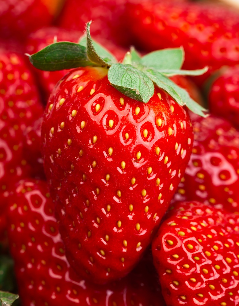 Eversweet Strawberry. Everbearer. Large, sweet fruit. Produces all summer long. Zones 5-10.