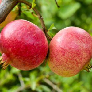 Russian Pomegranates