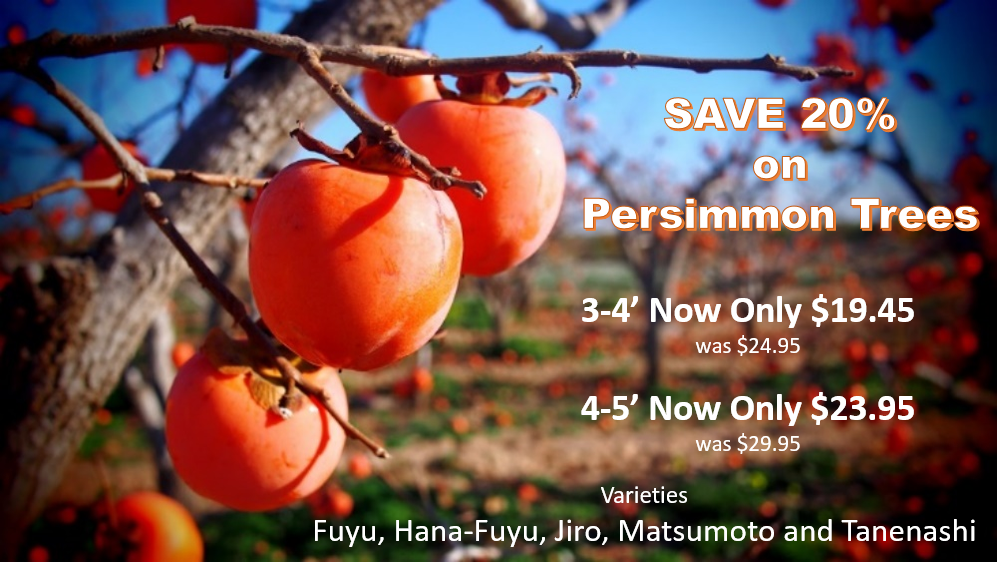 https://www.isons.com/wp-content/uploads/2017/01/Persimmon-Sale-20-OFF.png