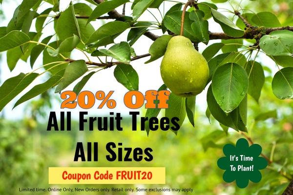 https://www.isons.com/wp-content/uploads/2017/02/Fruit-Tree-20_Off_2017_ss_150722042-2.jpg
