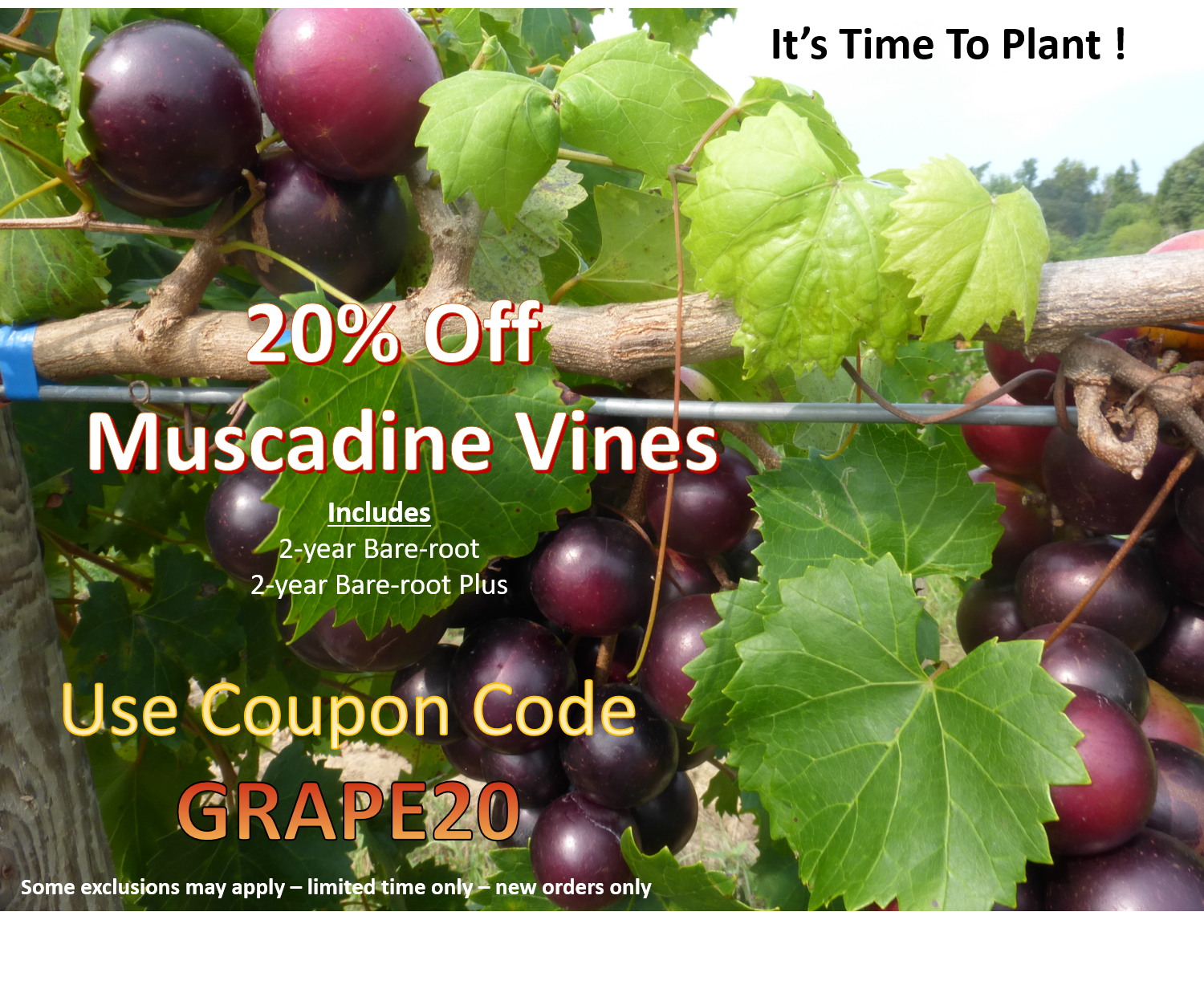 https://www.isons.com/wp-content/uploads/2017/02/Muscadines-20-Off-2017.png