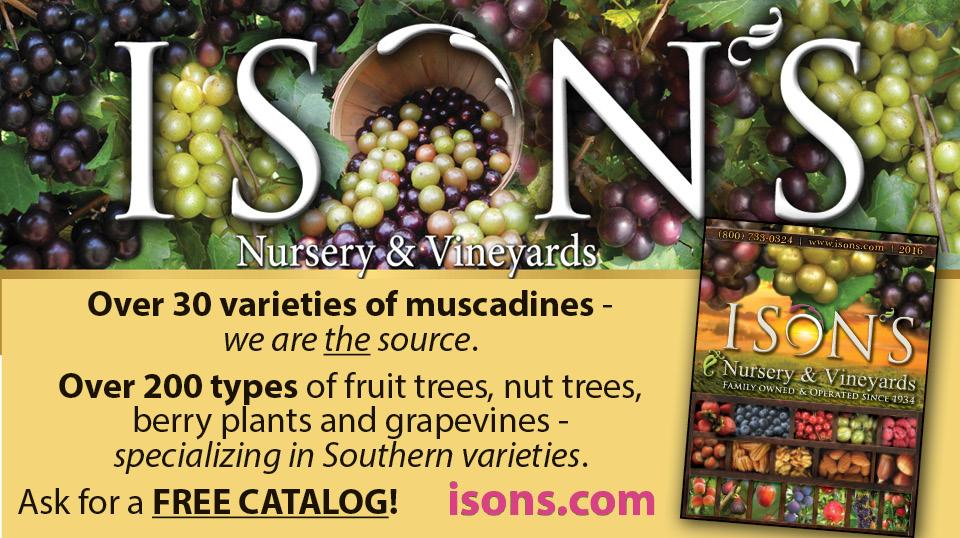 https://www.isons.com/wp-content/uploads/2017/05/Over-30-varieities-of-muscadines.jpg