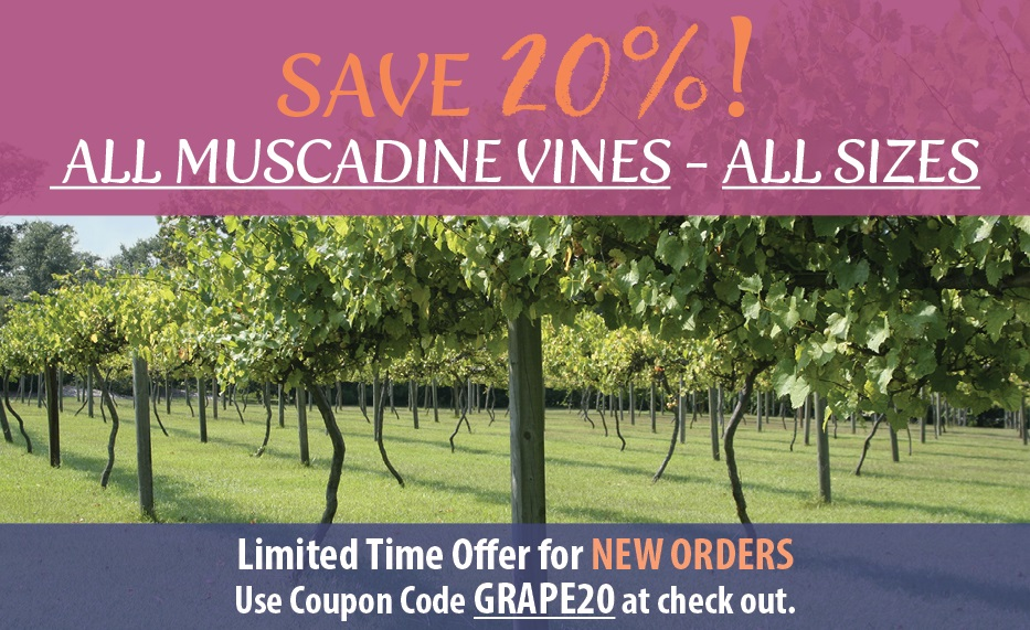 https://www.isons.com/wp-content/uploads/2017/08/Muscadine-SAVE20-700x428-banner.jpg