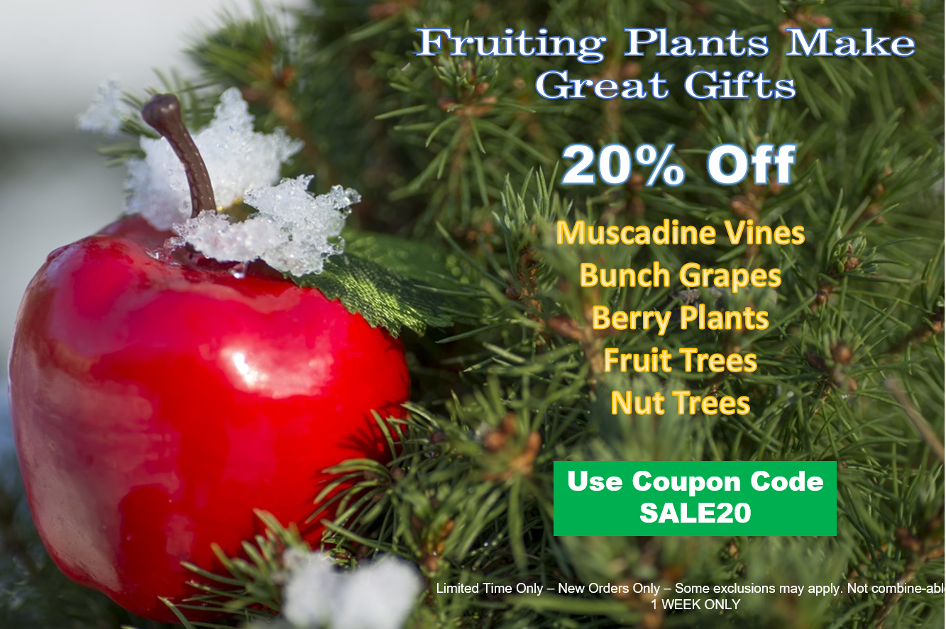https://www.isons.com/wp-content/uploads/2017/12/Fruiting-Plants-Christmas-Gifts.jpg.png