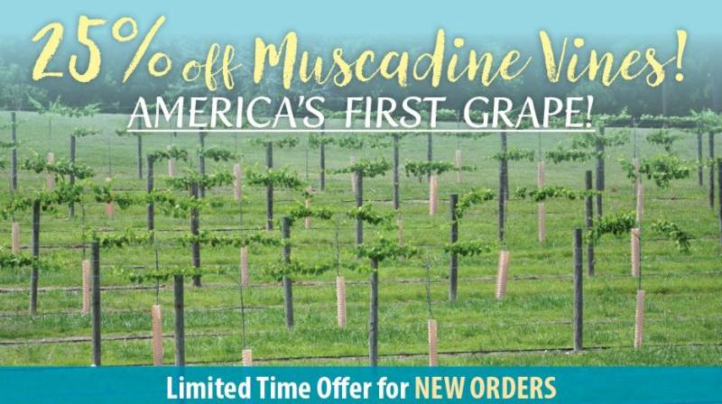 https://www.isons.com/wp-content/uploads/2018/08/Muscadine-SAVE-25-700x428-2.jpg