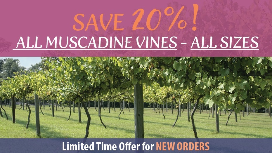 https://www.isons.com/wp-content/uploads/2018/09/Muscadine-SAVE20-700x428-banner-no-coupon.jpg