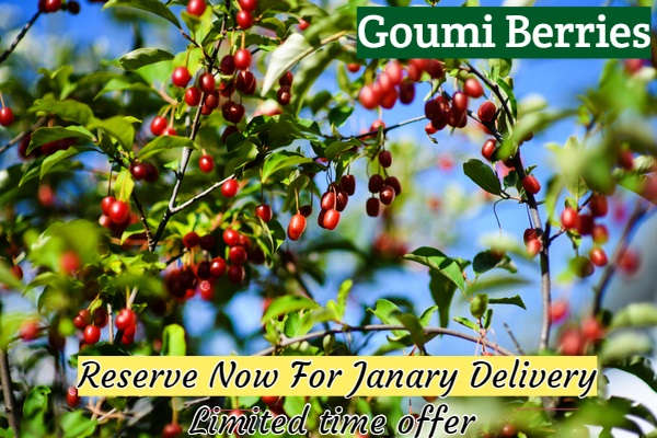 https://www.isons.com/wp-content/uploads/2018/10/Goumi-Berry-newsletter.jpg