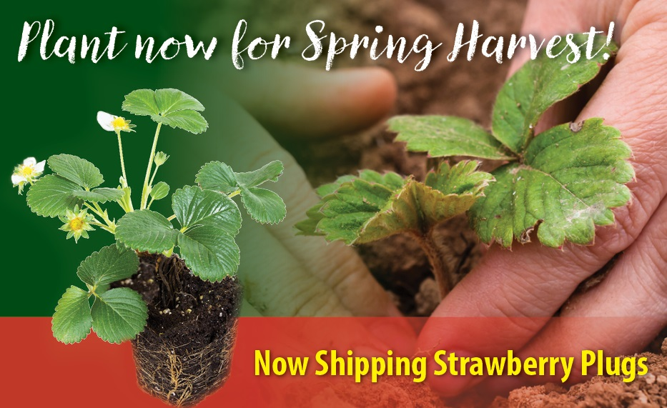 https://www.isons.com/wp-content/uploads/2018/10/Now-Shipping-StrawPlugs-700x428.jpg