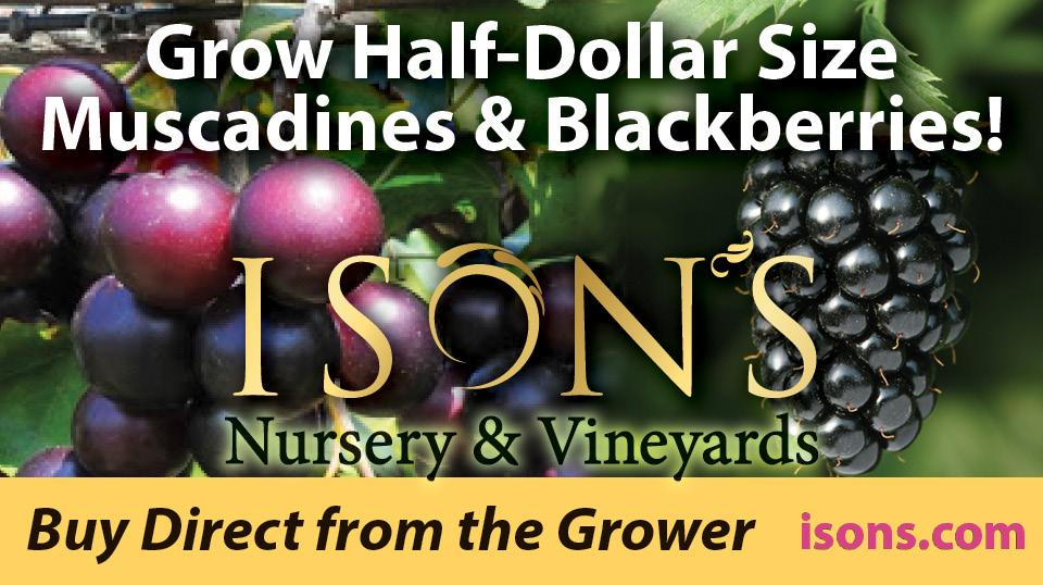 https://www.isons.com/wp-content/uploads/2019/02/Grow-half-dollar-size-muscadine-blackberry.jpg