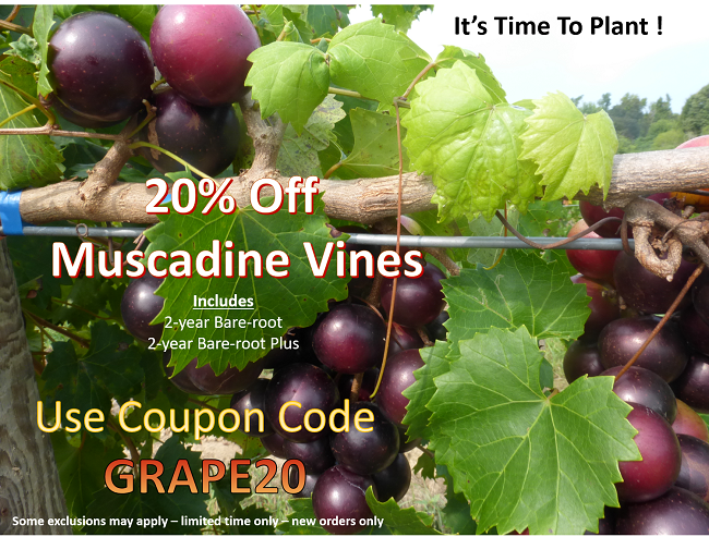 https://www.isons.com/wp-content/uploads/2019/03/Muscadines-20-Off-2017.png