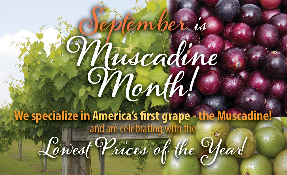 https://www.isons.com/wp-content/uploads/2019/09/Muscadine-Month-Save25-September-700x428.jpg