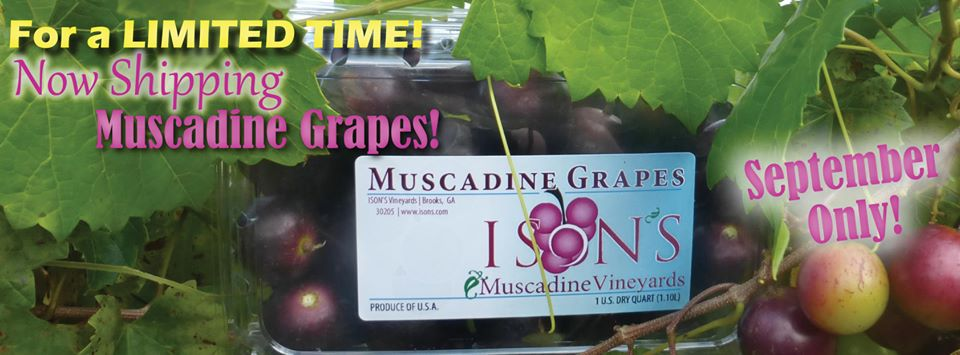 https://www.isons.com/wp-content/uploads/2019/09/Now-Shipping-Muscadines.jpg