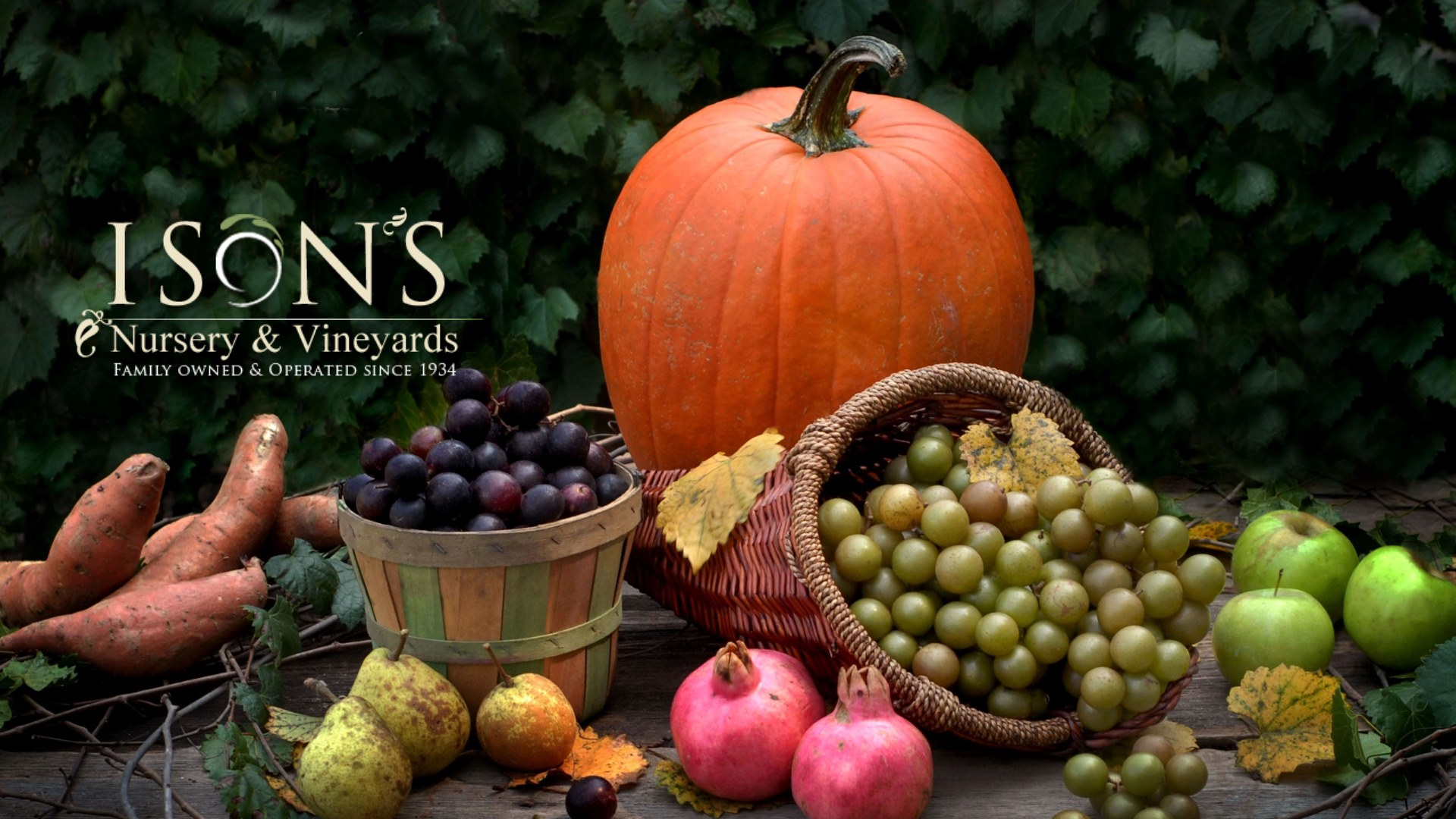 https://www.isons.com/wp-content/uploads/2020/10/Muscadine-Fall-Harvest-Picture.jpg